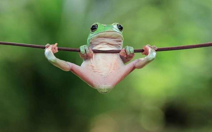 Лучшие фотографии животных за прошедшую неделю