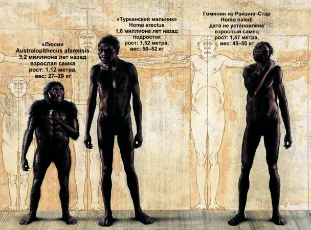 Новая ветвь эволюции: как совершалось великое открытие