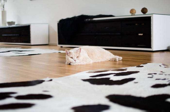 Уделяйте коту больше внимания, когда он стареет