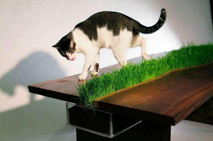 Мебель вдохновлённая природой