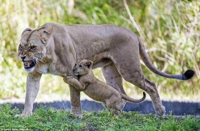 Мама всегда защитит