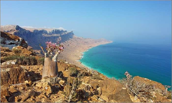 Сокотра - русский экватор без Турции и Египта: масштаб проекта сравним с Олимпиадой в Сочи-2014