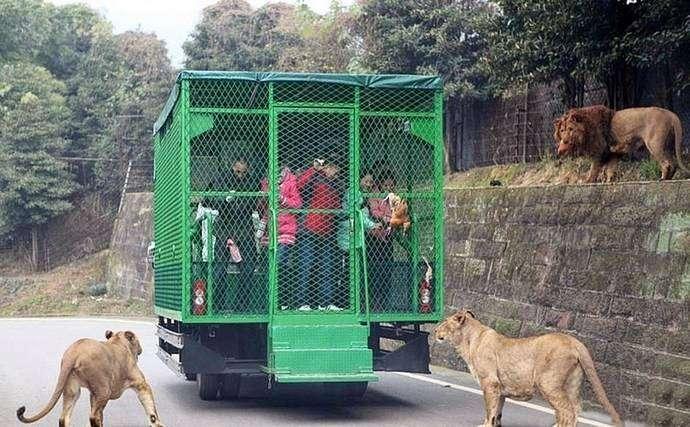 Зоопарк будущего
