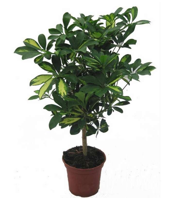 Топ-10 комнатных растений, которые лучше всего очищают и увлажняют воздух