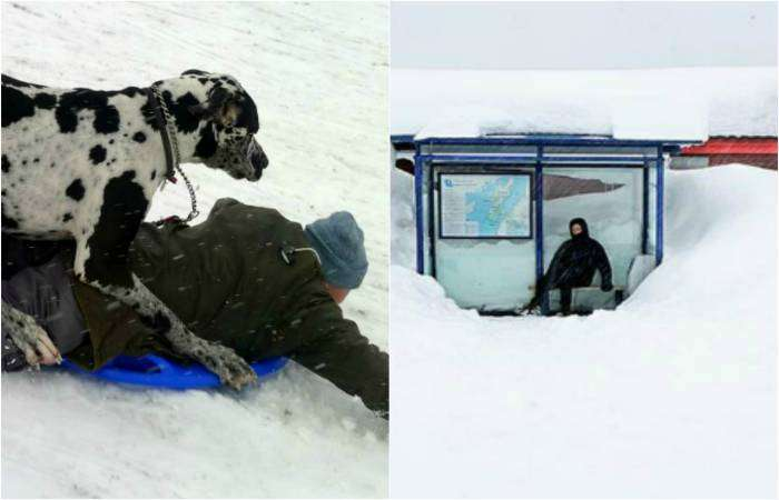 Забавные снимки о суровых зимних буднях.