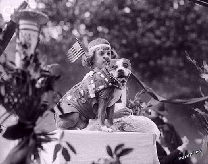 Сержант Стабби — героический пес Первой мировой войны