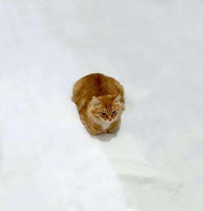 Дорисуй кота: в интернете набирает обороты новый тест на творческие способности (21 фото)