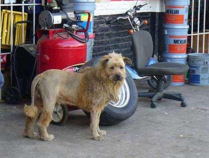 Собака или лев (2 фото)