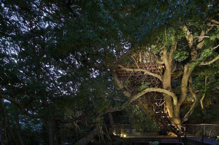 Самый большой дом на дереве в Японии (11 фото)