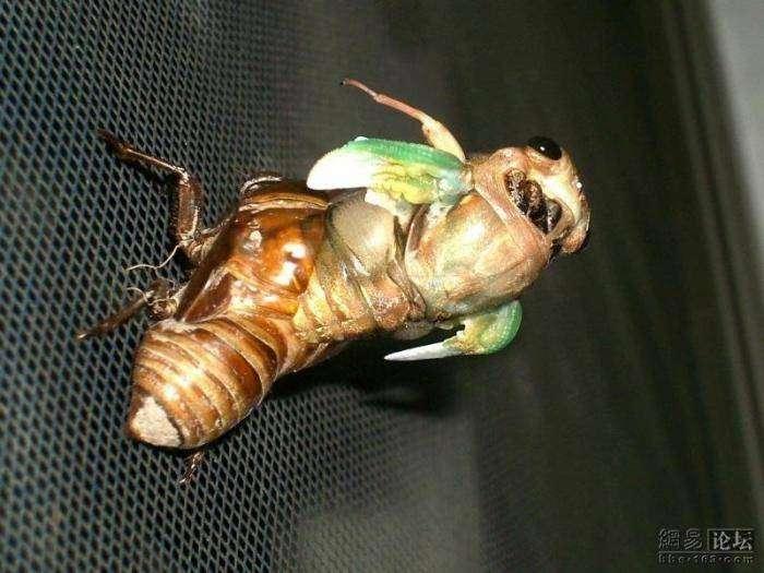 Превращение жука (10 фото)