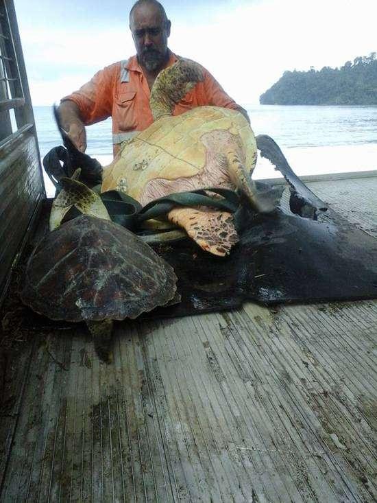 Необычная закупка морских черепах (4 фото)