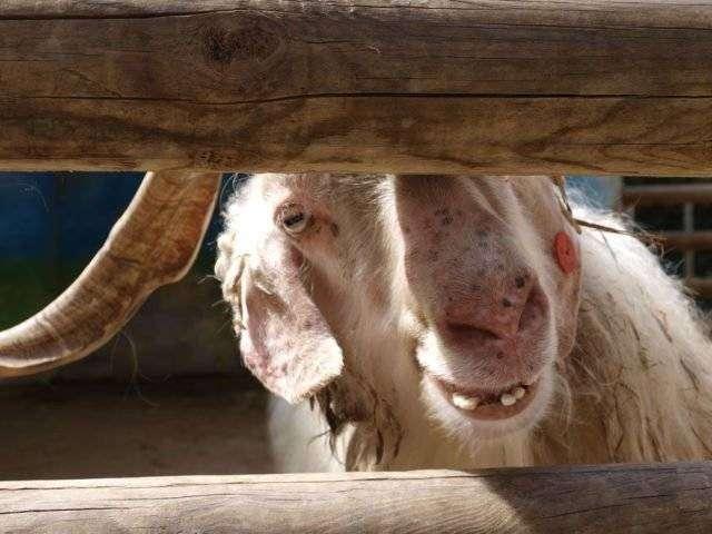 Смешные животные (51 фото)