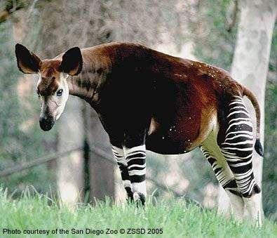 Странные животные (23 фото)
