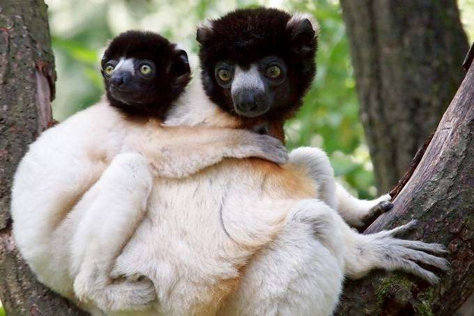 Где посмотреть на панд, коал и других мимимишек (11 фото)