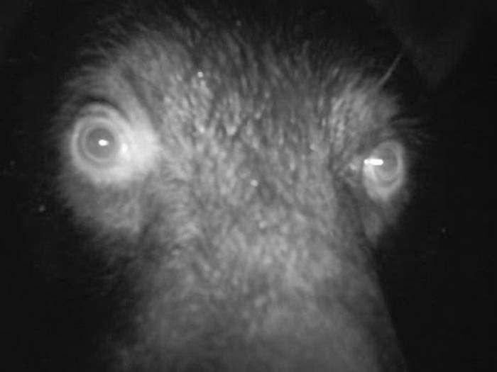 Странные снимки, сделанные фотоловушками (18 фото)