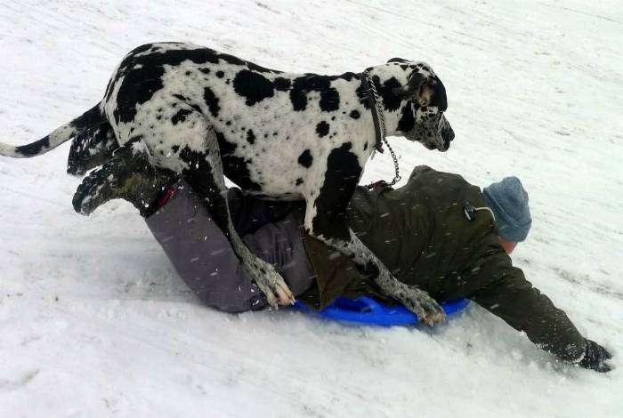 «Шарик, хватай ледянку и пошли кататься!»