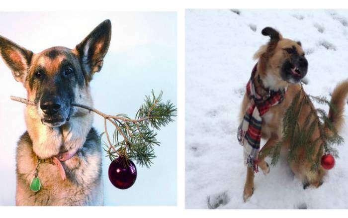 «Да уж, фотомодель из нашей собаки никакая!»