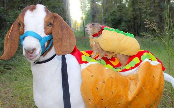 Смешные и интересные фотографии животных на прошлой неделе