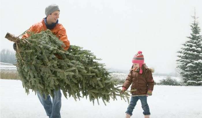 Как продлить жизнь елки на максимальное время