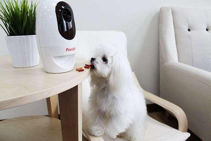 Робот Pawbo позволит всегда «оставаться на связи» со своим питомцем и развлечет его в отсутствие хозяина.
