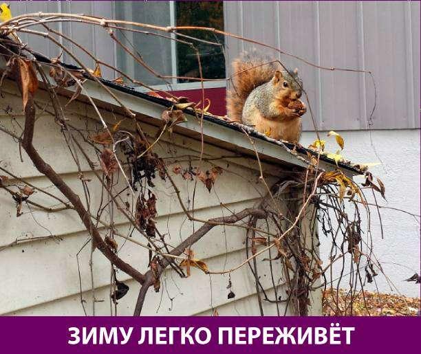 Приколняшка 569 #юмор #приколы #смешные картинки