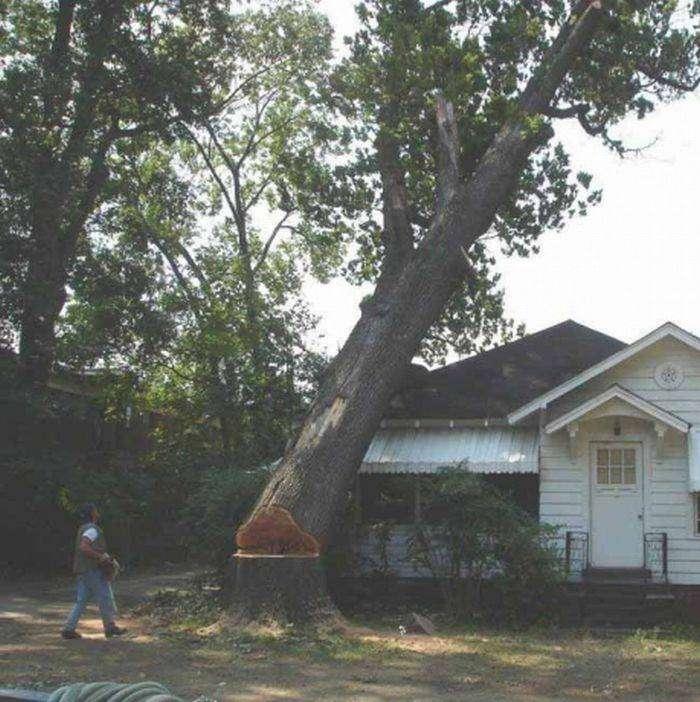 Спилил дерево (5 фото)