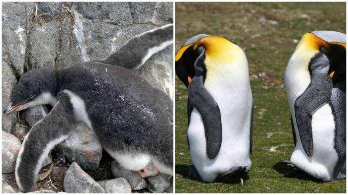 10 удивительных фактов о том, как спят животные (11 фото)