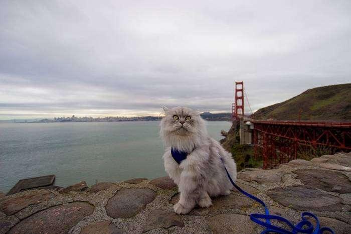 Кот-путешественник (9 фото)