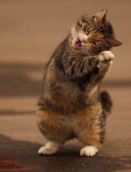 Смешной кот (8 фото)