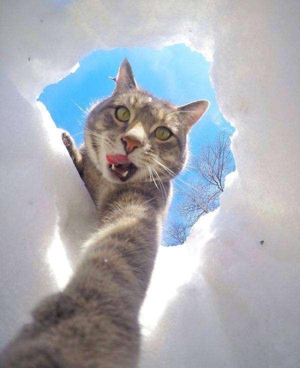 Мэнни - кот, который знает толк в селфи (8 фото)