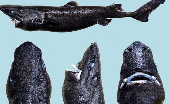 Челюсти: самые странные акулы в мире (9 фото)