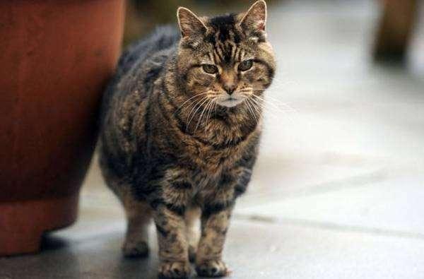 7 домашних животных-долгожителей (7 фото)