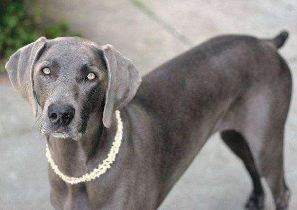 Самые умные породы собак (10 фото)