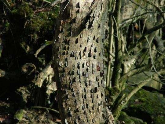 Денежное дерево (11 фото)