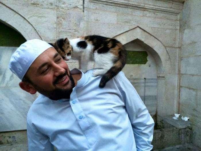 Добрый турецкий имам пускает в мечеть всех бездомных кошек (8 фото)