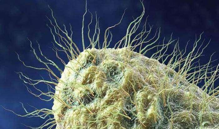 5 неприятных микроорганизмов, которые живут рядом с вами (5 фото)