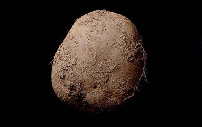 Снимок картошки продали за 1 миллион долларов (2 фото)