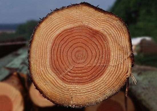 Это факт! Площадь срезов всех ветвей дерева на каждой высоте остается одинаковой и равна площади среза основного ствола