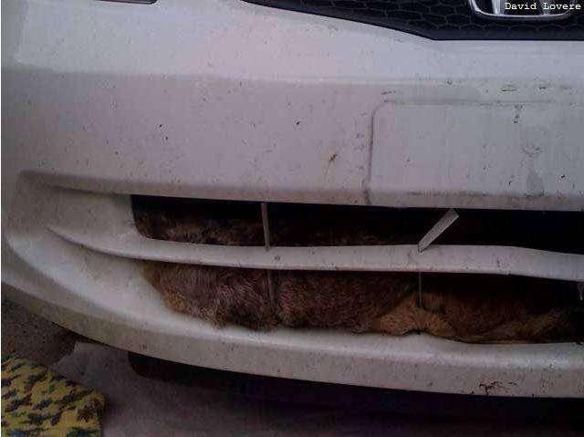 Машина и койот (6 фото)