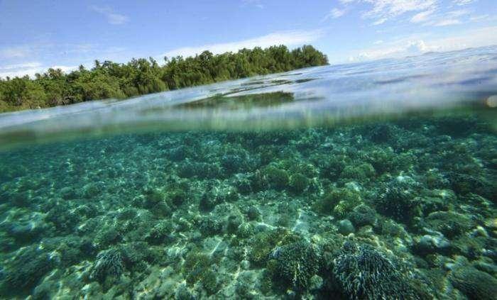 Экологические проблемы (28 фото)