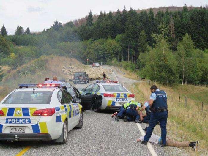 В Новой Зеландии отара овец помогла задержать нарушителей (3 фото)