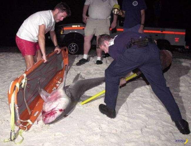 История об акуле и откушенной руке