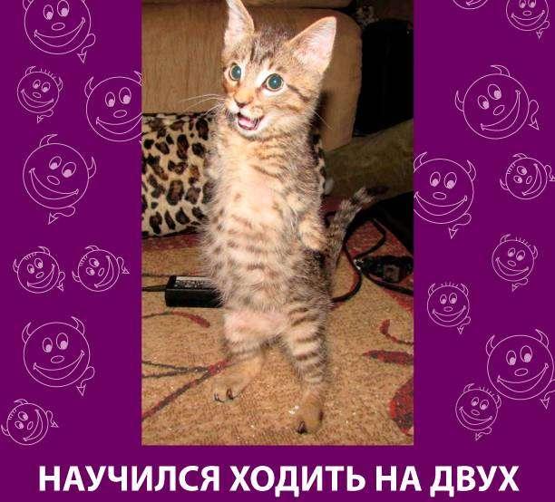 Приколняшка 584 #юмор #приколы #смешные картинки