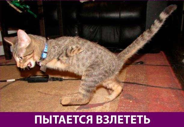 Приколняшка 585 #юмор #приколы #смешные картинки