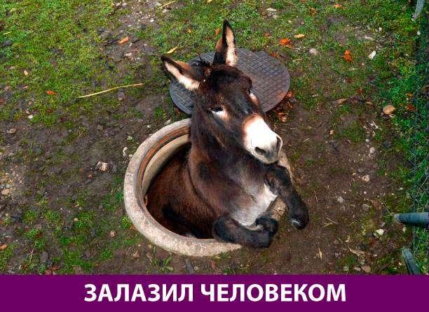 Приколняшка 542 #юмор #приколы #смешные картинки