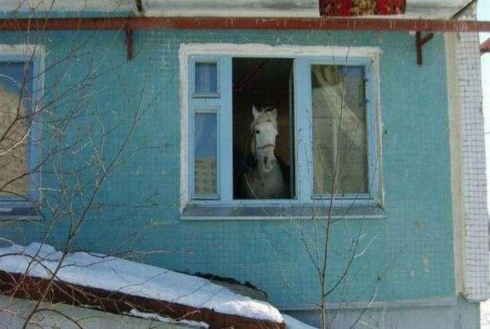 Наблюдаем за жизнью лошадки.