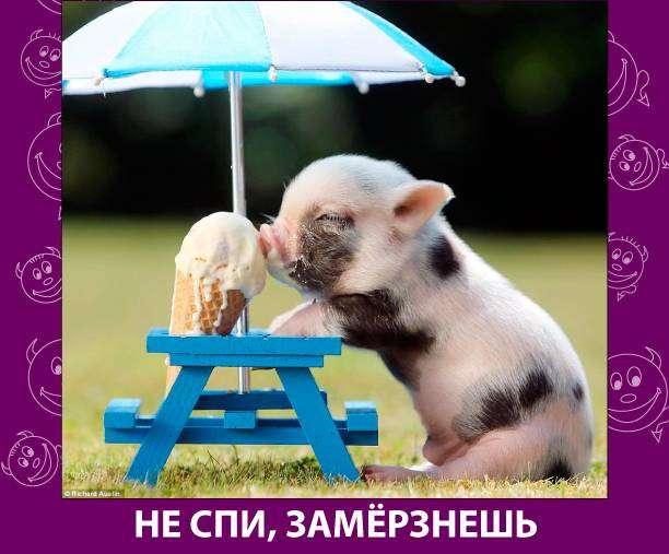 Приколняшка 544 #юмор #приколы #смешные картинки
