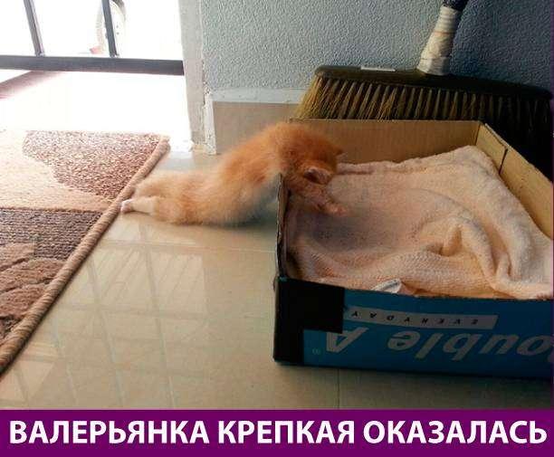 Приколняшка 570 #юмор #приколы #смешные картинки