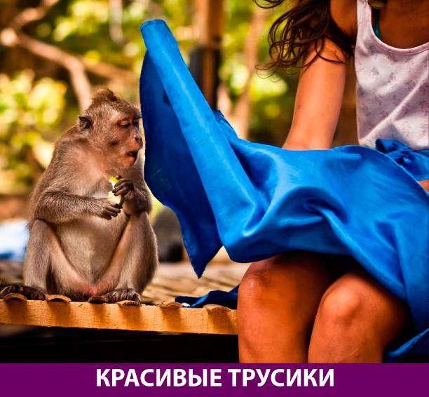 Приколняшка 546 #юмор #приколы #смешные картинки