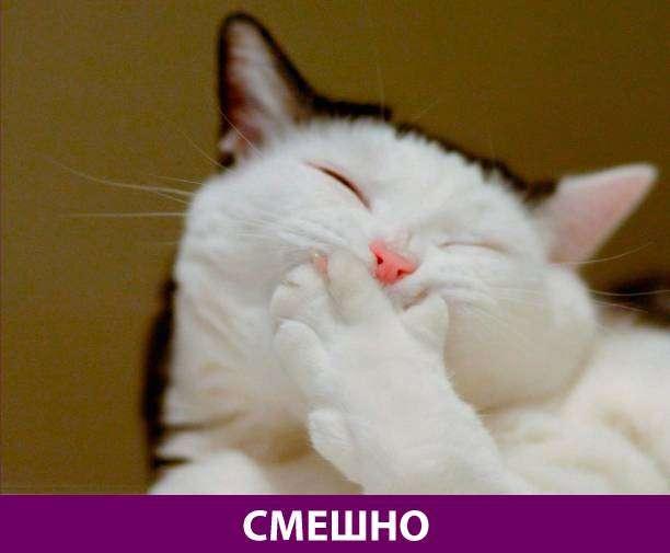 Приколняшка 592 #юмор #приколы #смешные картинки